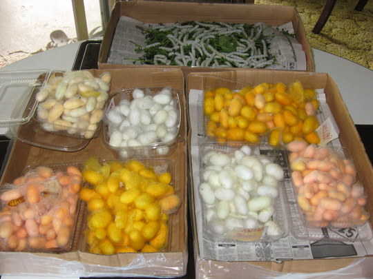 A variety of silk cocoons